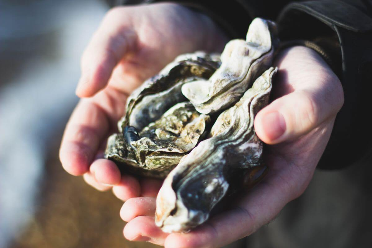Oysters, you know, shellfish
